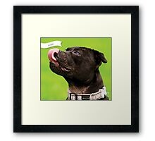 Scully :: by Wet Nose Fotos Framed Print