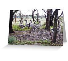 Geese amongst the gum trees Greeting Card