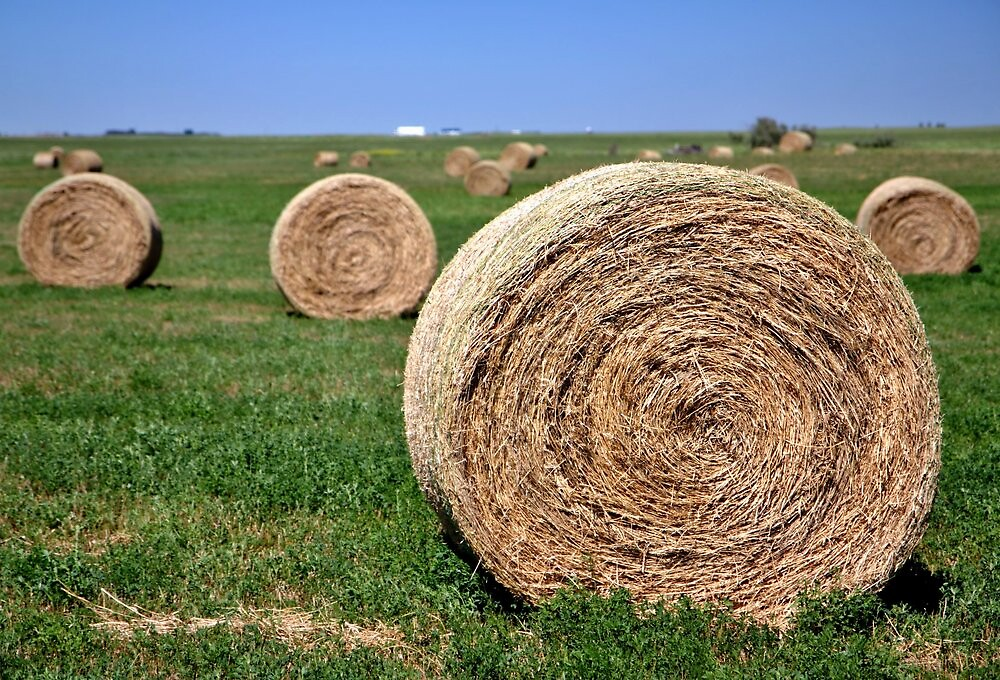 hay  by fotosky