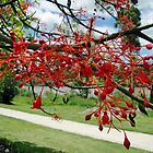 Flame Tree Flowers by STHogan