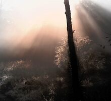The Light Of Angels by NatureGreeting Cards ©ccwri