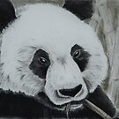Panda - tinted charcoal by gogston