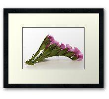 Pink Wild Flower Framed Print