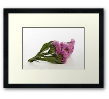 Purple Pink Wild Flower Framed Print