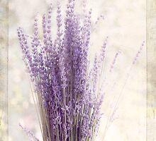 Lavender Bunch by Margi