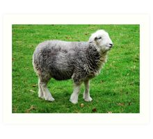 Herdwick, the cutest there is! Art Print
