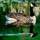 Canada Goose by doodledesign