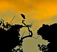 Grey Heron at Sunset by Lauren Tucker