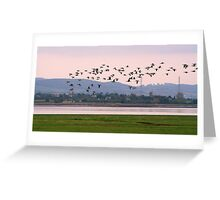 Barnacle Geese at Sunset Greeting Card