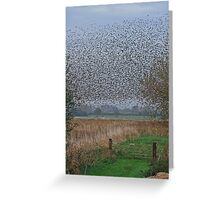 Starlings Roosting On The Levels Greeting Card