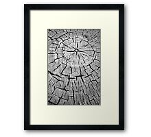 crack and annual rings of a tree Framed Print