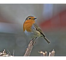 A Lone Robin Photographic Print
