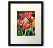 Harmony of Spring Framed Print