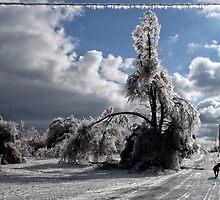Icy Dog Walk by Carolyn  Fletcher