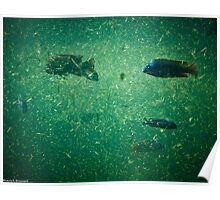 Cichlid Dreams Poster