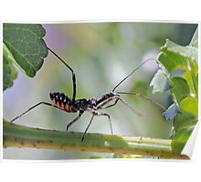 Metalic Assassin Bug - Family Reduviidae Poster