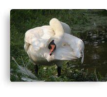 mute swan yoga Canvas Print