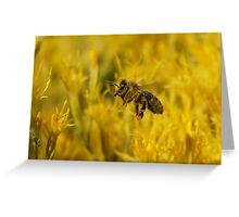 Pollen-covered bee in flight Greeting Card