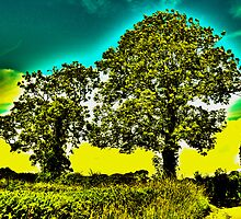 HDR Trees by joerelic37
