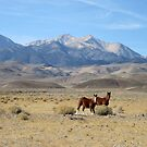 We Are Mustang, Born Free To Run Dedicated To Wild Horses by marilyn diaz