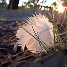 feather catching the morning sun by macinverts