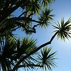 New Zealand cabbage tree by nzpixconz