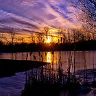 Sunset Cattails by Kathy Weaver