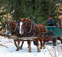 Horse Drawn Wagon Ride in the Snow by Mark Van Scyoc