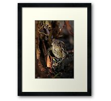 Water Droplet and Frog Framed Print