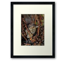 Looking Cool Framed Print