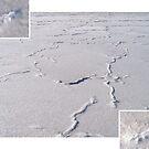 Salt Pan, Lake Sunday near Yorketown in South Australia by Craig Watson