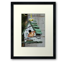 Confused Butterfly Framed Print