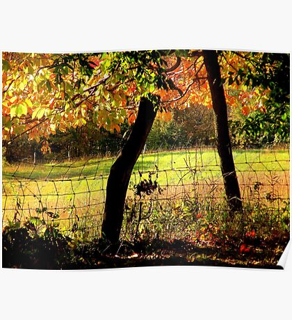 Field Through Trees and Barbed Wire Fence Poster