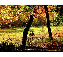 Field Through Trees and Barbed Wire Fence Photographic Print