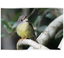 Pale Yellow Robin Poster
