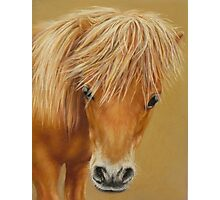 Miniature Pony Colt Photographic Print
