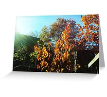 The Orange Leaves of A Plum Tree Greeting Card
