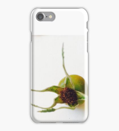 fruit of wild rose iPhone Case/Skin