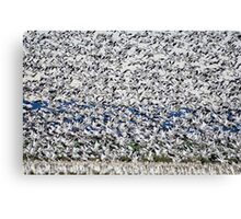 Skagit Valley Snow Geese Canvas Print