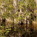 Big Cypress - Everglades by reisefoto