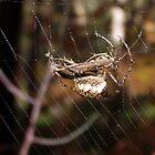 Spider with Prey by SophiaDeLuna