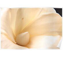 White Flower Poster