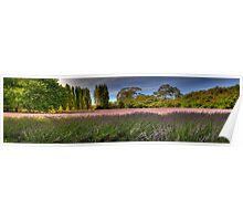 Lavender Dreams -  Lavendular, Daylesford, Victoria, Australia - The HDR Experience Poster