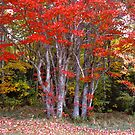 Fall in Canada, Prince Edward Island by johnrf