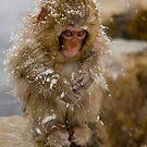 Monkey Magic #1 by Mark Elshout