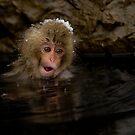 Monkey Magic #3 by Mark Elshout