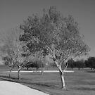 The Tree In Trinity Park by Jeffery W. Turner