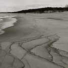 Lines on the Beach by Joy Fitzhorn