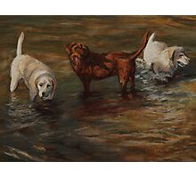 Pastel Painting - Labrador Retrievers in Cherry Creek Photographic Print