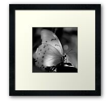 Who Needs Colors For Beauty ~ Part One Framed Print